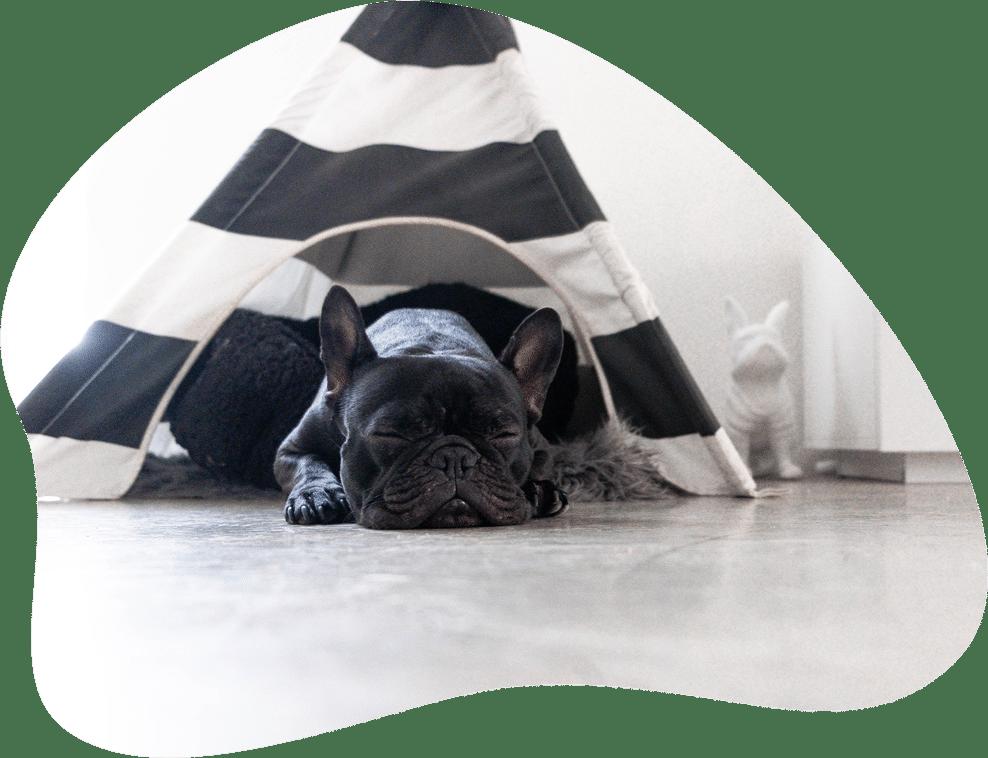 Hund schlafend in einem kleinen Tipi