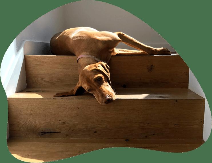 Hund liegt auf einer Treppe